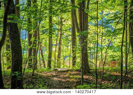 Bright green forest in sunny day light