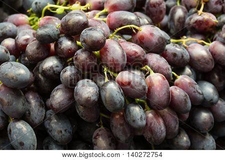 Blue Grapes Closeup