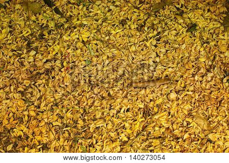 Dried flowers fall on the floor for background .