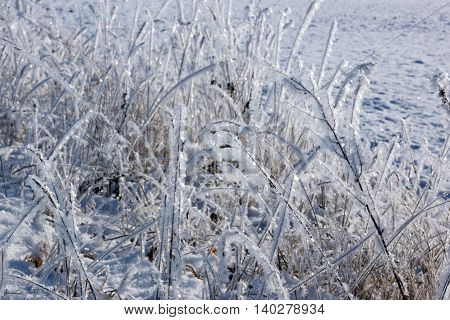 Winter background of frosty grass with copy space