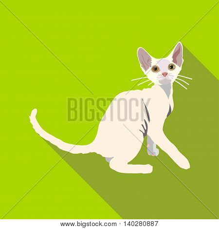 Cats Of Different Breeds With Long Shadow