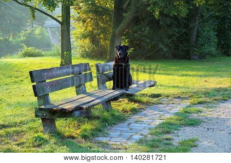 black dog is sitting on a wooden bench in the park