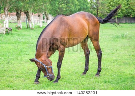 beautiful horse on the ranch Poti Georgia.