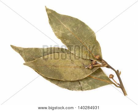 Dried Bay Laurel Leaves Isolated On A White Background Close Up.