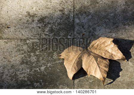 Photo of a dry leave with (sun and shadow) and ground