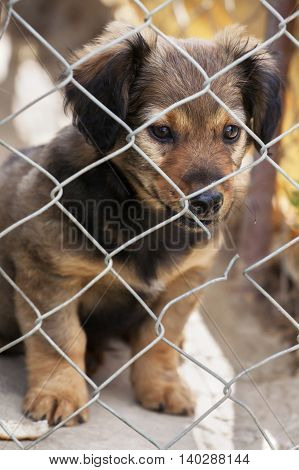 Shelter dog rescue - cute puppy looking behind the fence