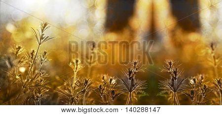 Nature website banner of a beautiful sunrise in autumn