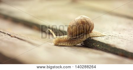 Website banner of a snail on a wooden board