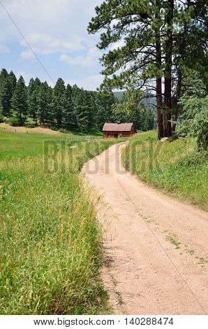 A dirt path leads to an old barn nestled in the Spruce trees in the Colorado mountains.