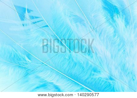 close up of the feather macro texture