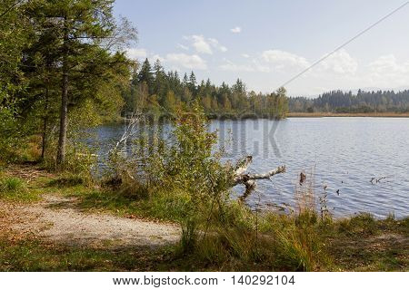 Idyllic Moor Lake Kirchsee, Wild Lake Shore