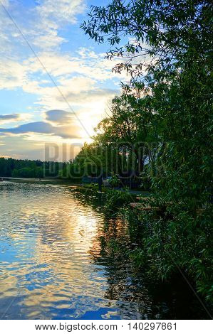 Trees on the bank of the river in the evening