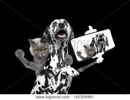 dog and cat photographed selfie on the phone -- isolate on black background