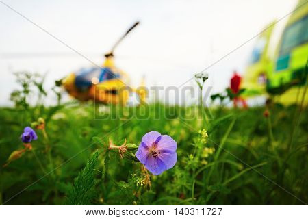 Air ambulance is landing on the meadow. Cooperation air rescue service with emergency medical service on the ground. - selective focus on the flower