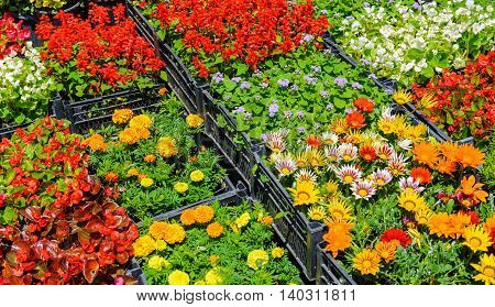 many different varieties of different color flowers in boxes on the floor