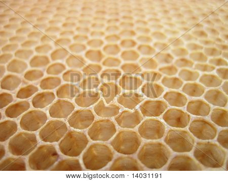 Beeswax Texture Without Honey