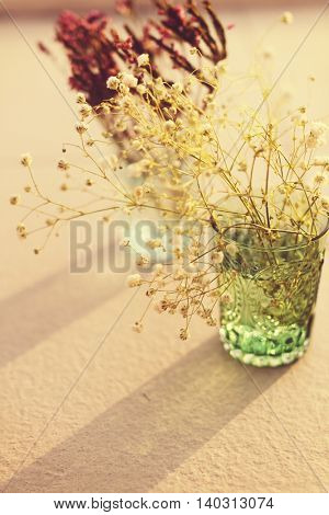 Glass Plant Decoration Beautiful Concept