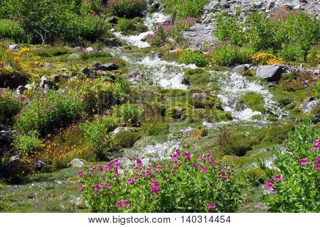 Alpine Stream at Mount Rainier National Park