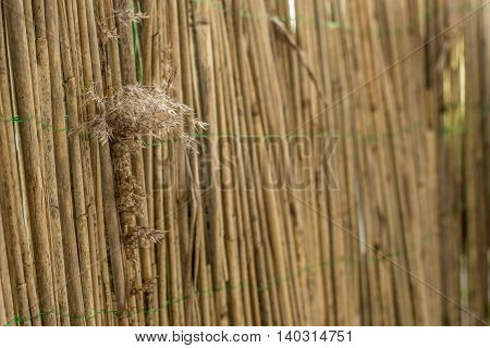 Fence out of bamboo poles with reed