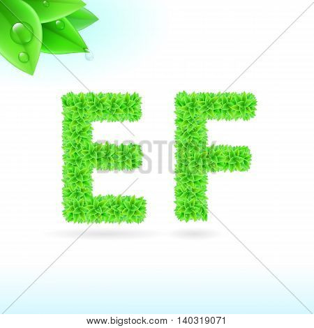 Sans serif font with green leaf decoration on white background. E and F letters