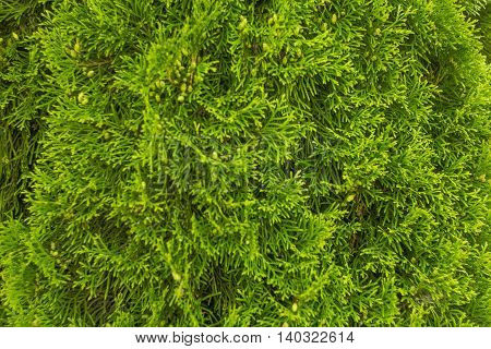 Juicy green background of structure of leaves of a tree