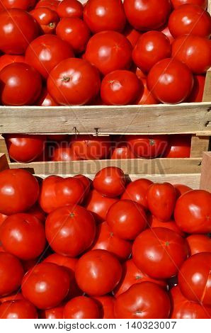 Tomatoes in wooden crates ready for market