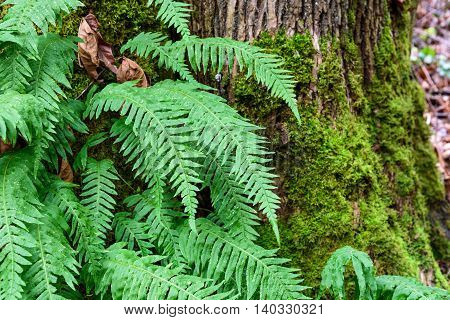 Vibrant winter scene in the woods, closeup of fern growing from a tree