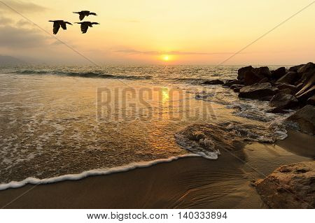 Ocean sunset birds is a seascape with sea water moving through sand and rocks as the orange sun sets on the ocean horizon and three birds fly silhouetted overhead..