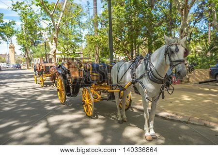 The typical old carriage drawn by a white horse stopped in the park of Plaza de Espana in Seville, Andalusia, Spain.