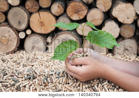 Childs hands protect a young tree in pellets