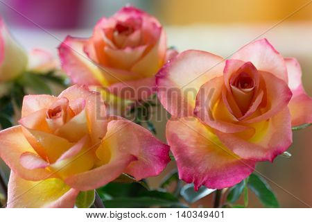 Three orange roses as a small declaration of love