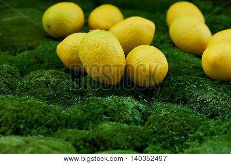 A lot of juicy yellow lemons on the thick green moss golanska