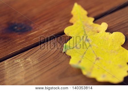 nature, season, autumn and fall concept - close up of yellow oak tree autumn leaf on wooden table