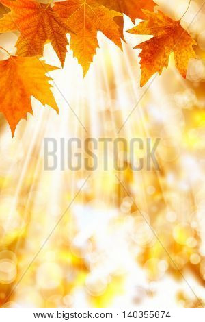 an image of a leaves in autumn