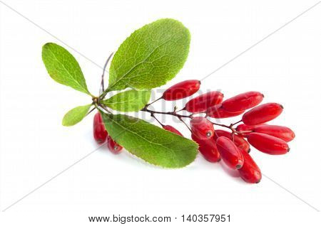 ripe barberries isolated on a white background