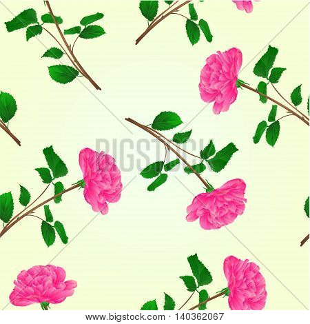Seamless texture pink rose stem with leaves and blossoms vector illustration
