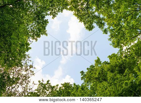 foliage of tree crowns in spring landscape