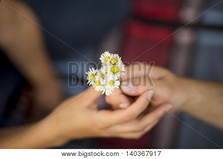 Detail of hands where boyfriend is giving flowers to girlfriend while they are on a picnic in a park. Focus on the flowers