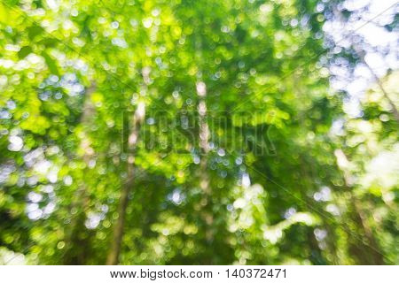 Abstract Bokeh And Blurred Green Nature Background In Tropical Forest.