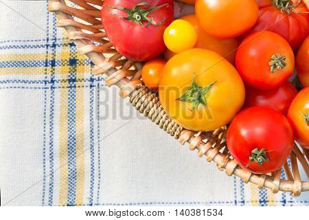 Various fresh picked organic tomatoes in a basket top view