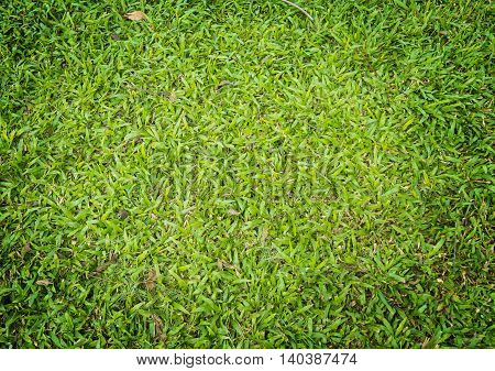 Naure Green Grass Texture background vignetting plant