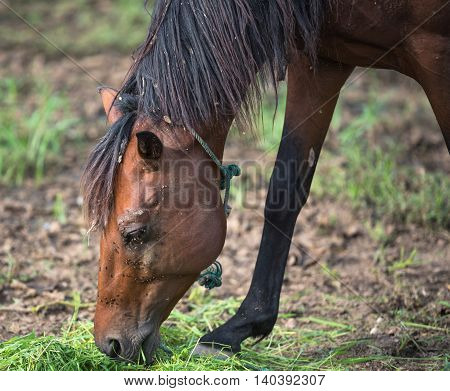 dirty horse/dirty horse/Horse eating grass It was filled with insects
