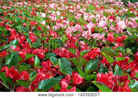 a lot of bright red and pink flowers in Gorky Park Moscow