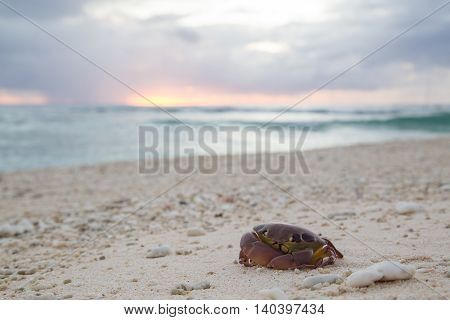 Close-up of a dead crab at a beach on Lady Elliot Island in Queensland, Australia