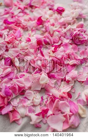 on white cloth scattered pink rose petals