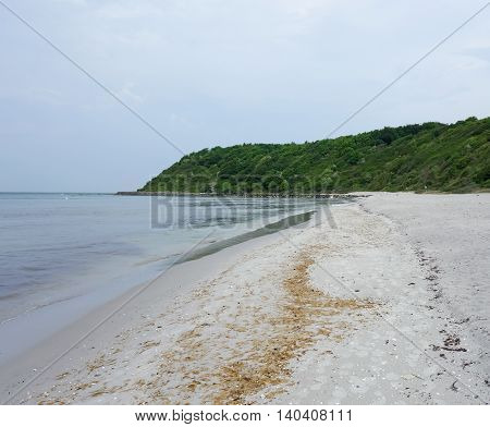 Wooded hillside at the beach on Hiddensee Island Germany