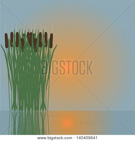 Cane reflecting in the water, red sun, vector illustration