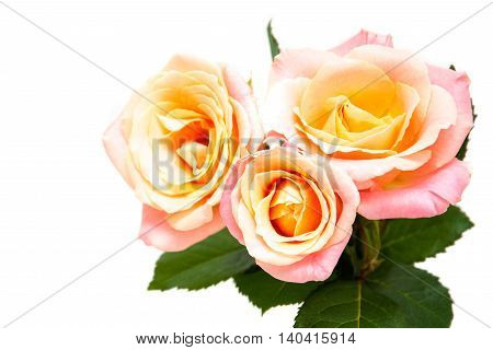 Beautiful pink roses isolated on a white background