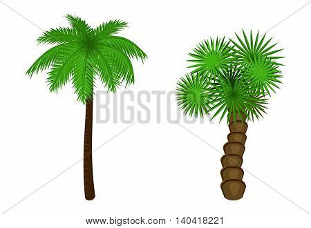 Illustration of a palm tree, two palm tree on white background
