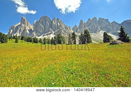 Blloming field and mountains Trentino Alto Italy